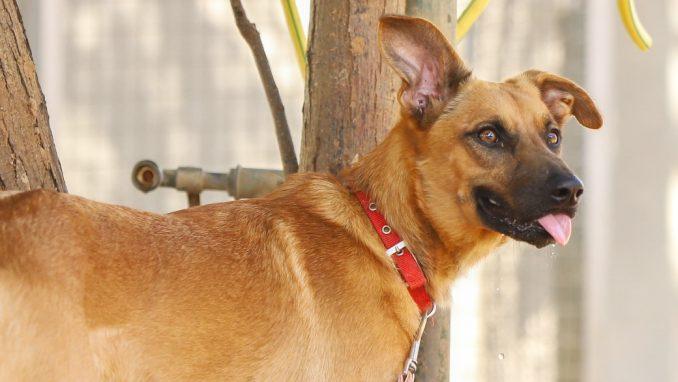 לורד – כלב לאימוץ – אגודת צער בעלי חיים בישראל