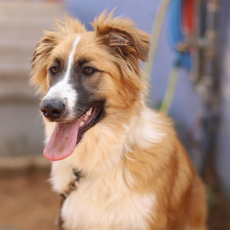 שוש – כלב לאימוץ – אגודה צער בעלי חיים ישראל