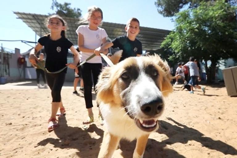 תלמידי בית הספר השבעה מאזור תורמים לבעלי החיים - אגודת צער בעלי חיים בישראל