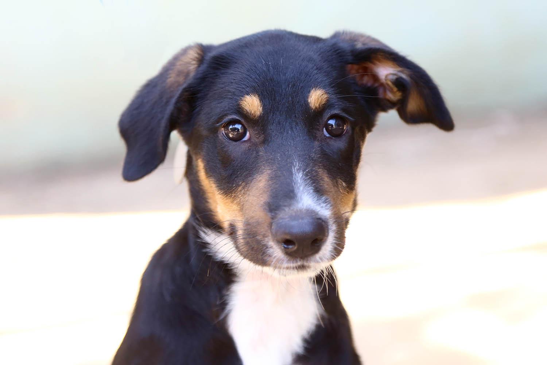 ג'ני – כלבה לאימוץ – אגודת צער בעלי חיים בישראל