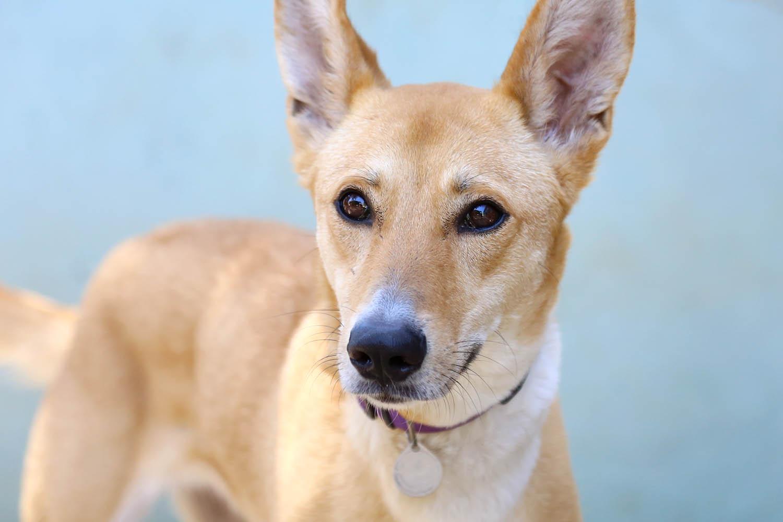 ג'וי – כלבה לאימוץ – אגודת צער בעלי חיים בישראל