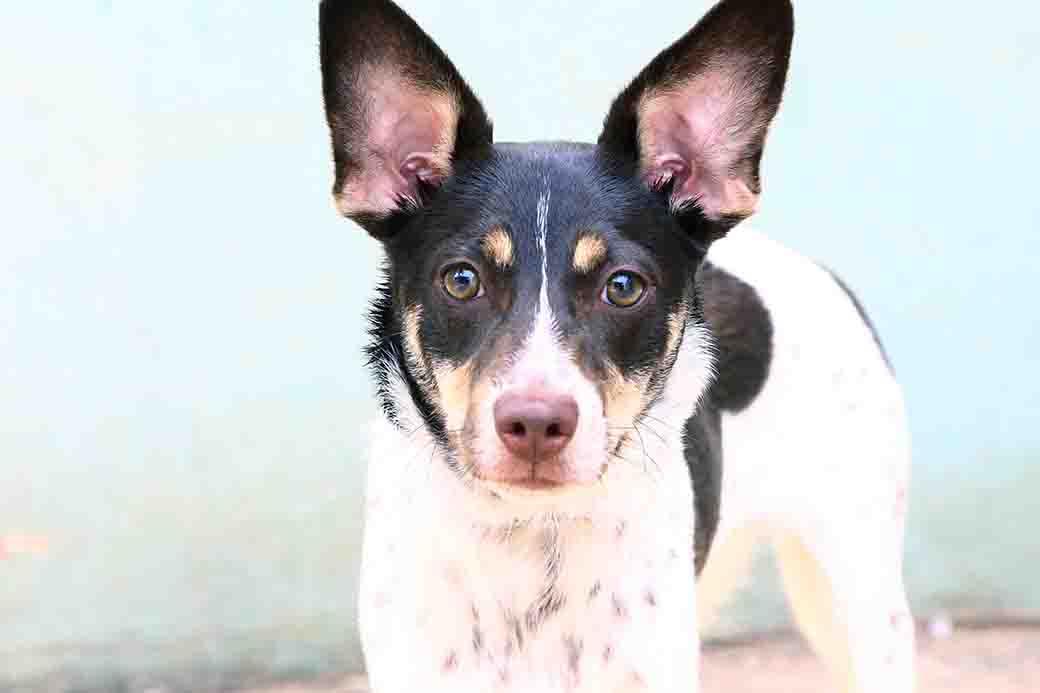 ריי – כלב לאימוץ – אגודת צער בעלי חיים בישראל