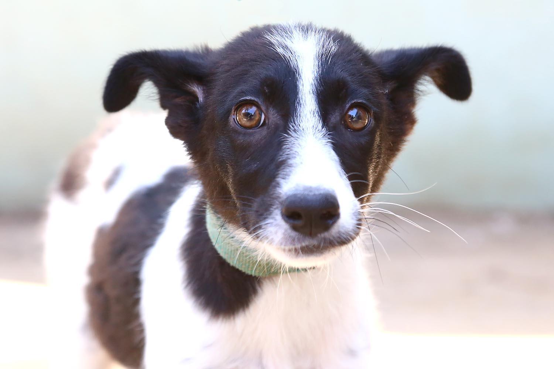 מותק – כלבה לאימוץ – אגודת צער בעלי חיים בישראל