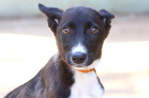 בלה – כלבה לאימוץ – אגודת צער בעלי חיים בישראל