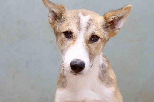 ברי – כלב לאימוץ – אגודת צער בעלי חיים בישראל