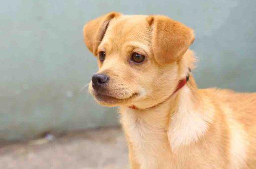 צ'ייסר – כלב לאימוץ – אגודת צער בעלי חיים בישראל
