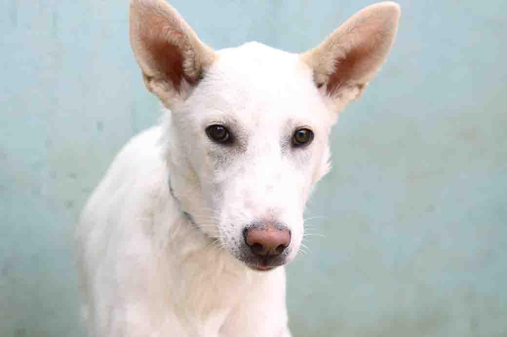 שאול – כלב לאימוץ – אגודה צער בעלי חיים בישראל