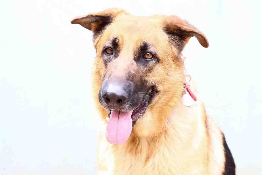 אמילי – כלבה לאימוץ – אגודה צער בעלי חיים בישראל
