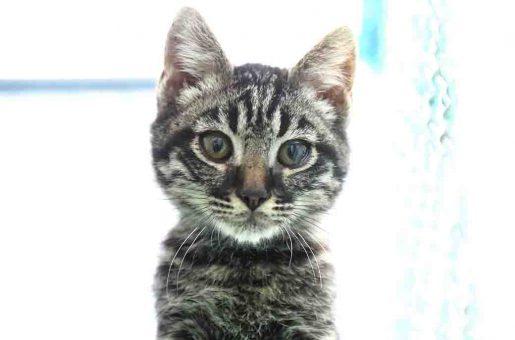 עזרה – חתול לאימוץ – אגודת צער בעלי חיים בישראל