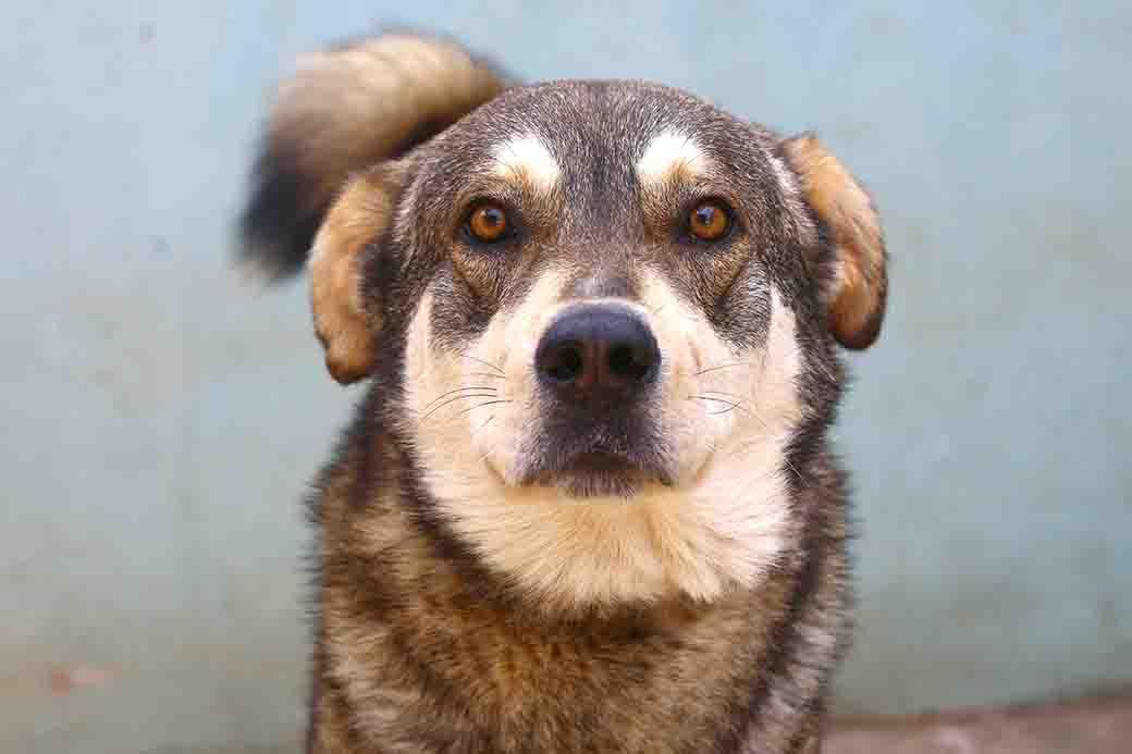 אמבר – כלב לאימוץ – אגודת צער בעלי חיים בישראל