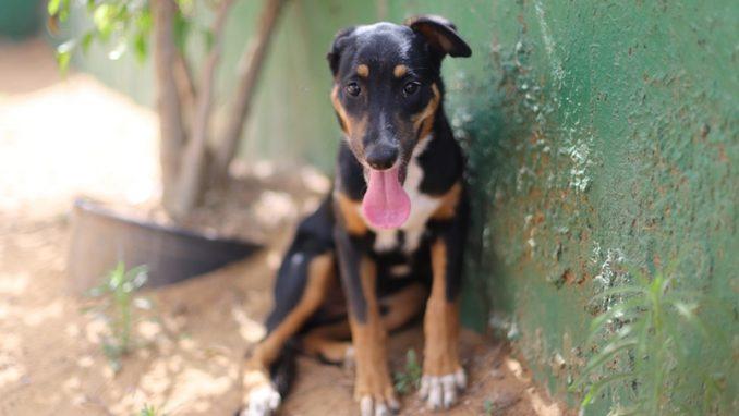 ג'ני – כלבה לאימוץ – אגודה צער בעלי חיים ישראל