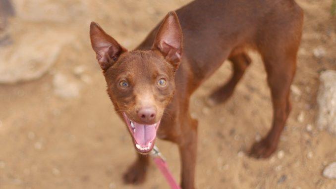 מקס – כלב לאימוץ – אגודת צער בעלי חיים בישראל