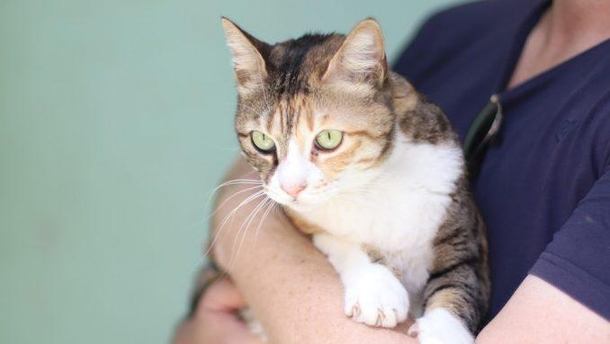 ג'ולי – חתולה לאימוץ – אגודת צער בעלי חיים בישראל