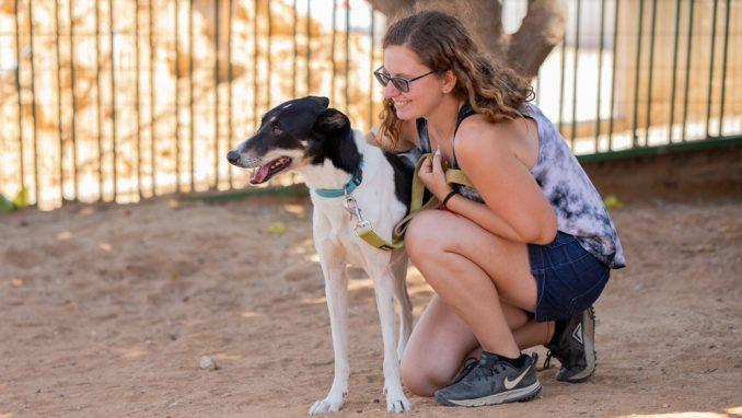 מישמיש – כלבה לאימוץ – אגודת צער בעלי חיים בישראל