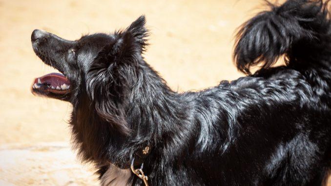 בוני – כלב לאימוץ – אגודת צער בעלי חיים בישראל