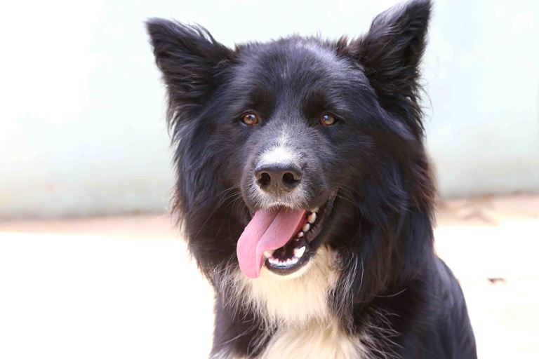בוני – כלב לאימוץ – אגודת צער בעלי חיים