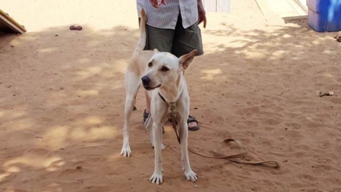 במבי - כלבה לאימוץ - אגודת צער בעלי חיים בישראל