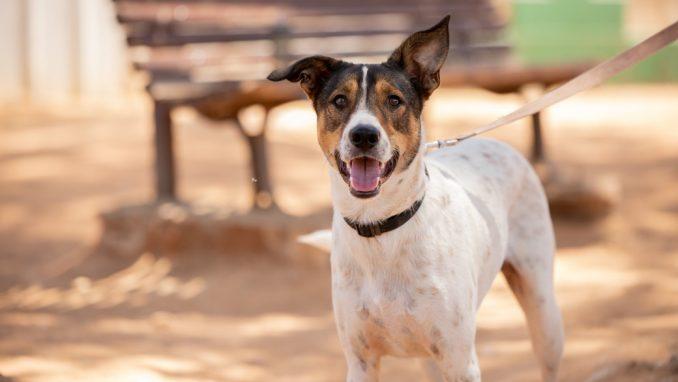 ג'וני – כלב לאימוץ – אגודת צער בעלי חיים בישראל