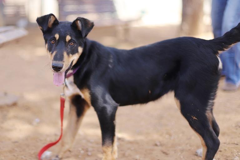 ג'סי – כלבה לאימוץ – אגודת צער בעלי חיים