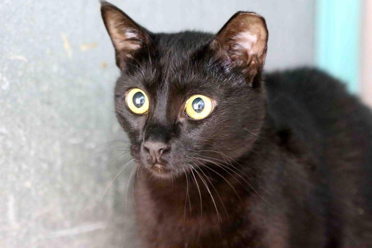 פופי - חתולה לאימוץ - אגודת צער בעלי חיים בישראל