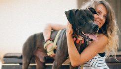 פיט - כלב לאימוץ - אגודת צער בעלי חיים בישראל