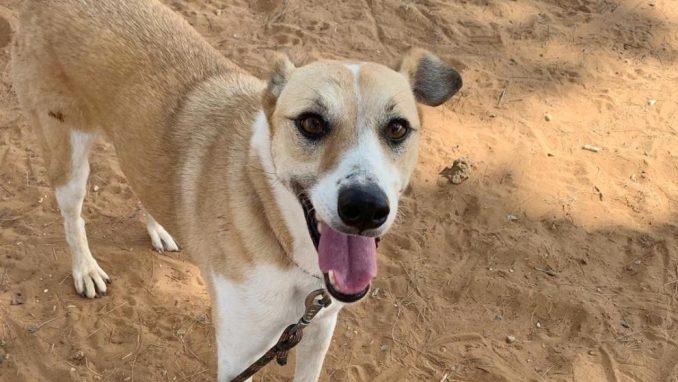 צ׳יקיטה – כלבה לאימוץ – אגודת צער בעלי חיים בישראל