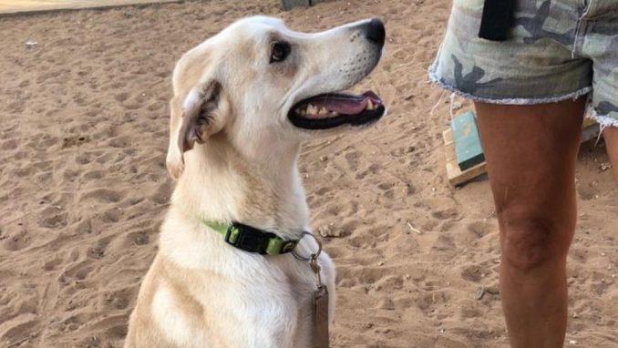 רינו - כלב לאימוץ - אגודת צער בעלי חיים בישראל