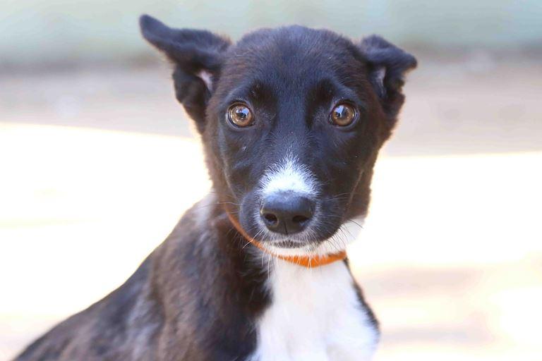 בלה - כלבה לאימוץ – אגודת צער בעלי חיים