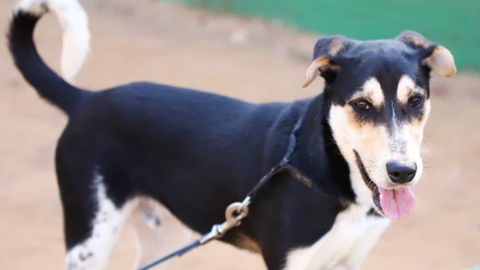 נמש - כלב לאימוץ - אגודת צער בעלי חיים בישראל