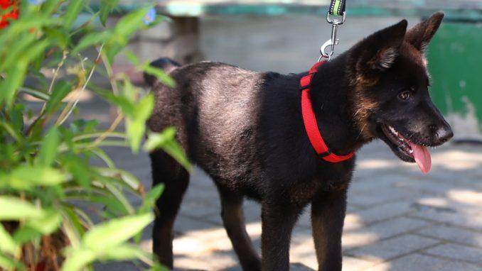 לוקה – כלבה לאימוץ – אגודת צער בעלי חיים בישראל