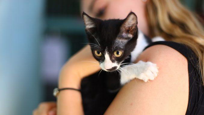 לאפה – חתולה לאימוץ – אגודת צער בעלי חיים בישראל