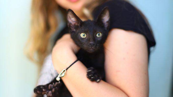בים – חתול לאימוץ – אגודת צער בעלי חיים בישראל