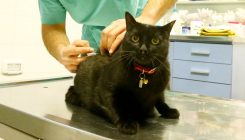עיקור וסירוס חתולים - אגודת צער בעלי חיים בישראל