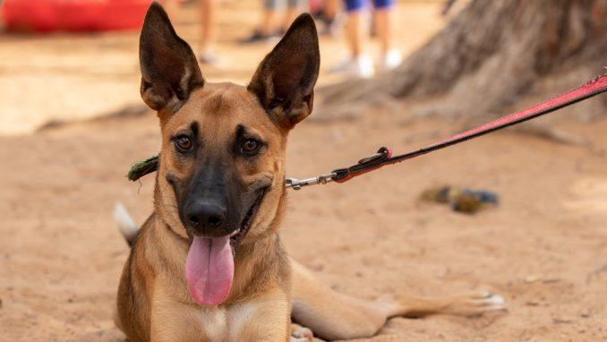 אושר – כלב לאימוץ – אגודת צער בעלי חיים בישראל