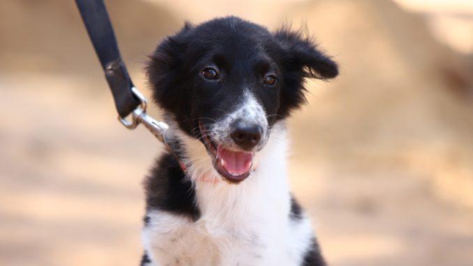 אליס – כלבה לאימוץ – אגודת צער בעלי חיים בישראל