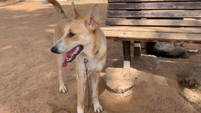 אלכס – כלב לאימוץ – אגודת צער בעלי חיים בישראל