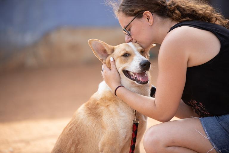 אלכס - כלב לאימוץ - אגודת צער בעלי חיים בישראל