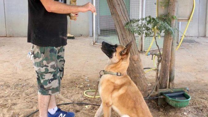 אקסום - כלב לאימוץ - אגודת צער בעלי חיים בישראל