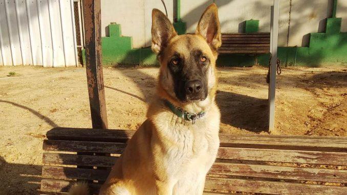 אקסום – כלב לאימוץ – אגודת צער בעלי חיים בישראל