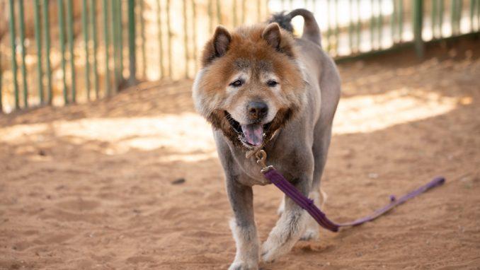 ארצ'י – כלב לאימוץ – אגודת צער בעלי חיים בישראל