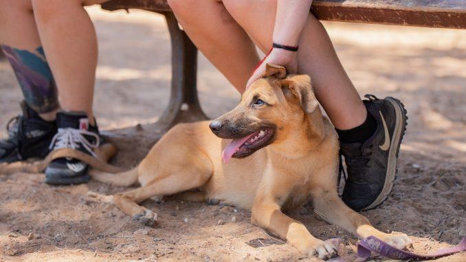 בקס - כלב לאימוץ - אגודת צער בעלי חיים בישראל