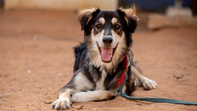 דנוור – כלב לאימוץ – אגודת צער בעלי חיים בישראל