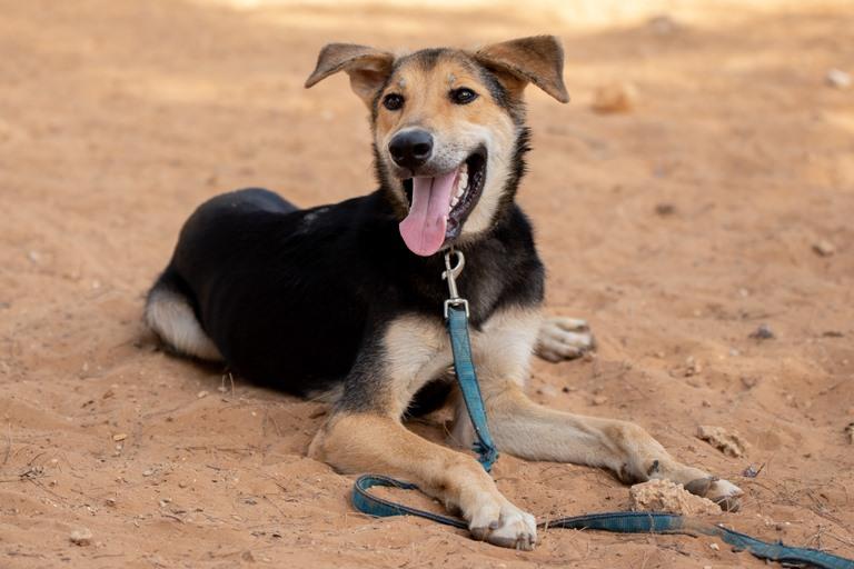 חץ – כלב לאימוץ – אגודת צער בעלי חיים בישראל