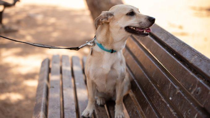 טולי – כלבה לאימוץ – אגודת צער בעלי חיים בישראל