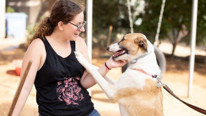 לולה – כלבה לאימוץ – אגודת צער בעלי חיים בישראל