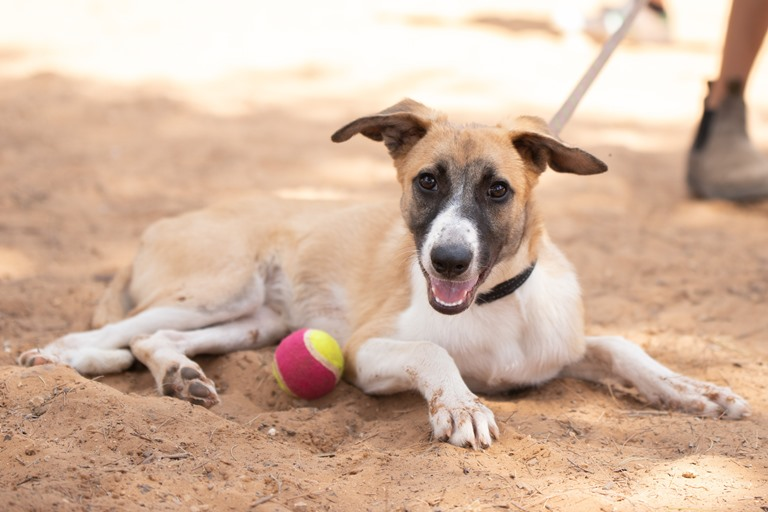 מיקי - כלבה לאימוץ - אגודת צער בעלי חיים בישראל