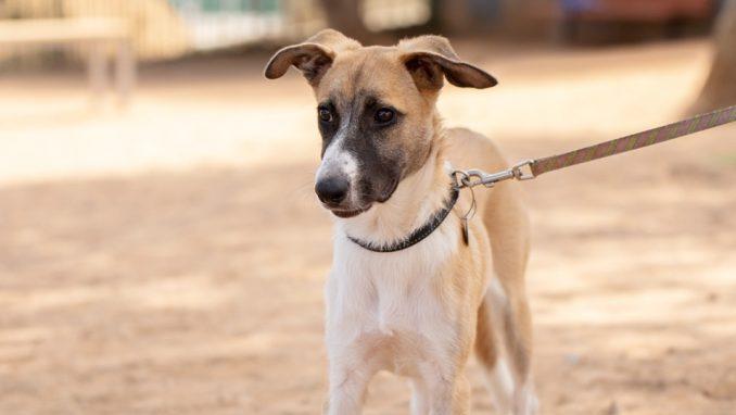 מיקי – כלב לאימוץ – אגודת צער בעלי חיים בישראל
