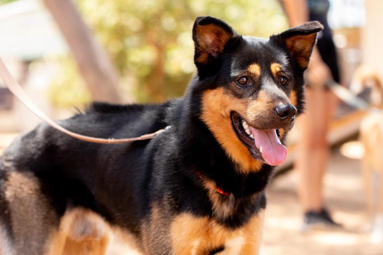 מקס - כלב לאימוץ - אגודת צער בעלי חיים בישראל