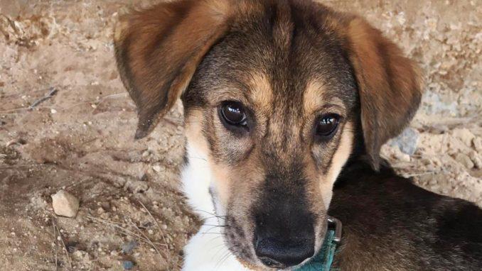 סקיי – כלב לאימוץ – אגודת צער בעלי חיים בישראל