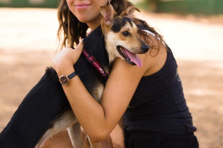 פיטר - כלב לאימוץ - אגודת צער בעלי חיים בישראל